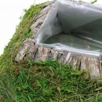 Växtkudde mossa, bark 20cm × 20cm