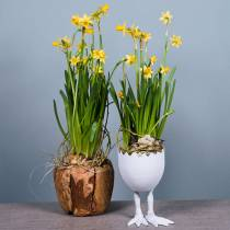 Plantera potten äggskal med ben Ø13cm H21cm vit