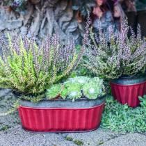 Växtkruka oval röd, silverzink 26 × 13cm H11cm
