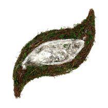 Växtvågsvin, mossa 45cm x 18cm H7cm