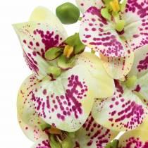 Konstgjord orkidégren Phaelaenopsis Green Pink H49cm