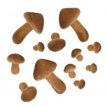 Svamp ljusbrun mix 2 cm - 8 cm 12 st