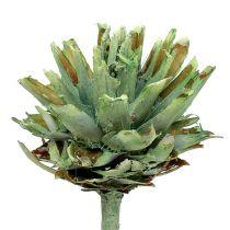 Plumosum 1 grön frostat 25p