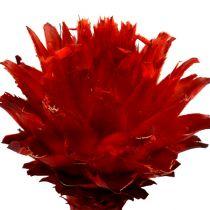 Plumosum 1 röd 25st