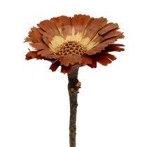 Repens rosettljus 8-9cm 25st