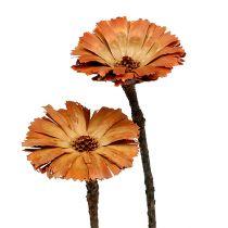 Repens rosett natur 6-7cm 50p