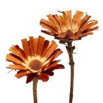 Repens rosett Super 10 - 12cm 20st