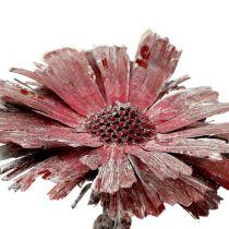 Protea rosett ljung frostat Ø8-9cm 25st