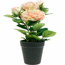Dekorativ ros i en kruka, romantiska sidenblommor, rosa pion