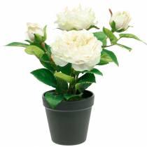 Pion i en kruka, romantisk dekorativ ros, sidenblomma krämvit