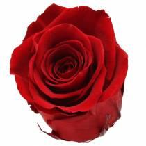 Infinity rosor stora Ø5,5-6cm röd 6st