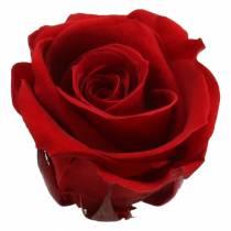 Konserverade rosor medium Ø4-4,5cm röd 8st