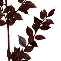 Ruscus kvistar mörkröd 75cm - 95cm 1kg