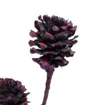 Salignum grenar med kottar Bordeaux 25st