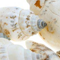 Dekorativa snigelskal tomma i ett bastnät Havssniglar 400g
