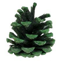 Svart furukotte frostad grön 5-7cm 1 kg