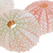 Sjöborre dekoration maritim rosa, vit, grön sommar dekoration 12st