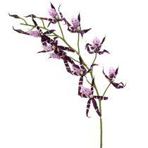 Spindelorkidéer Brassia Lila 108 cm 3st