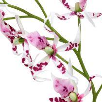 Spindelorkidéer Brassia Pink-White 108cm 3st