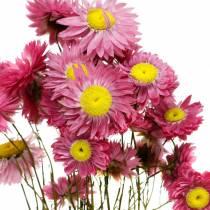 Halmblomma i ett gäng Rosa torkade blommor 25g