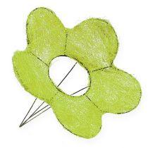 Sisal manschettblomma grön Ø25cm 6st