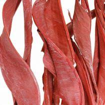 Strelitzia lämnar röda frostat torra blommor 45-80cm 10st