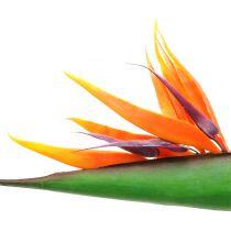 Strelitzia paradisfågelblomma 95cm
