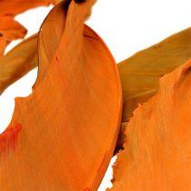 Strelitzia lämnar orange 120 cm 20st