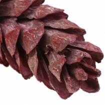 Strobus kottar naturlig dekoration röd 15cm - 20cm 50st