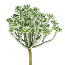 Succulent Echeveria 17cm grå 3st