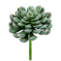 Suckulentgrön Ø8,5cm L13cm