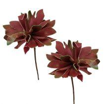 Suckulenter mörkröda Ø10cm 12st