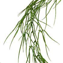 Suckulent växt hänger grönt 145cm
