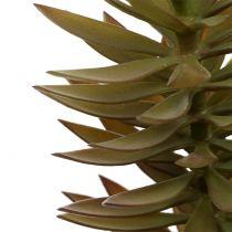 Suckulent gren ljusbrungrön 48cm