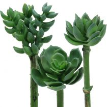 Succulents sorterade 11 cm 3st