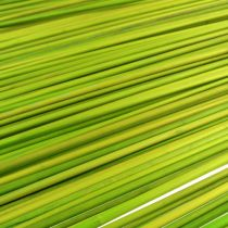 Dekorativa pinnar Tonkin 70cm ljusgrön 150p