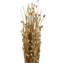 Torkade blommor vallmokapslar naturlig torkad vildtorkande dekorationsbunt 100g