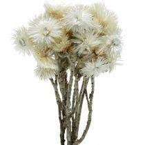 Torkade blommor Kepsblommor naturliga vita, eviga blommor, torkade blommor bukett H33cm