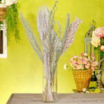 Torkade blommor exotisk vit-natur mix, torr flora mix