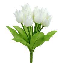 Tulpanbuske vit 30 cm