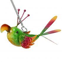 Fågel att hänga grönt, rosa, orange 18,5 cm