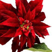Julstjärna röd 70cm