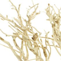 White Bush blekt 5st