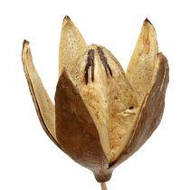 Vild lilja på pinne naturliga färger Ø6,5cm L55cm 45st