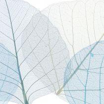 Willow lämnar skelettblått, grått blandat 200 st