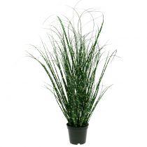 Zebra gräs i en kruka grön 60cm