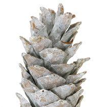 Socker kotte vitkalkad 20cm - 30cm