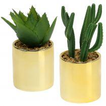 Kaktusgrön i en gyllene kruka 12cm - 17cm 4st
