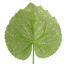 Dekorativa växter lämnar Galax W10cm L22cm 24st