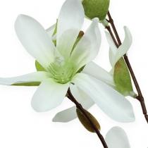 Magnolia gren ljusgrön 91cm